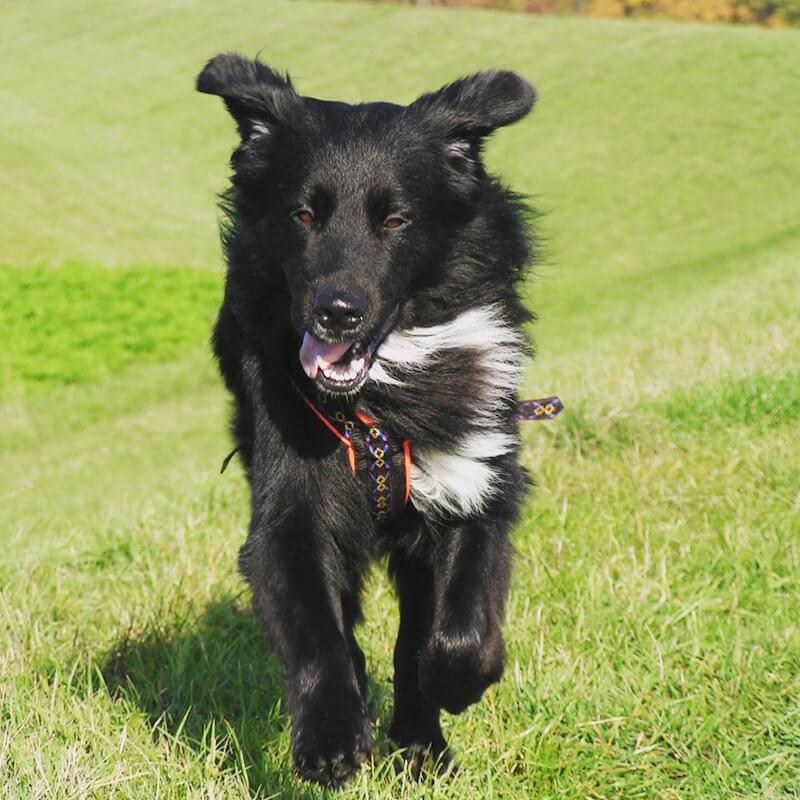 Hund mit glänzendem Fell