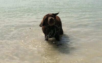 Die Reiseapotheke für den Hund