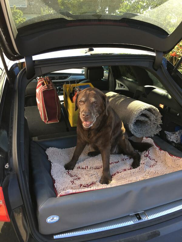 Urlaub mit dem Hund - Reiseapotheke